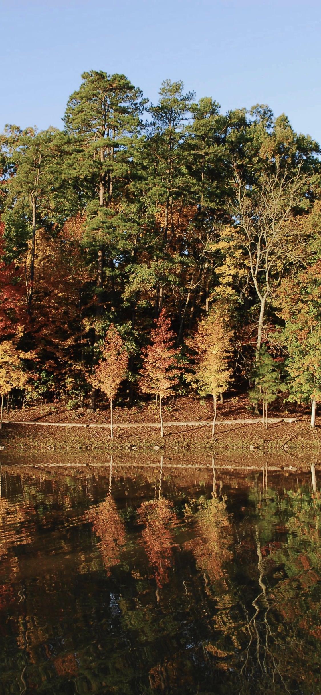 Pemandangan Gugur Daun Alam Pohon Wallpapersc IPhoneX
