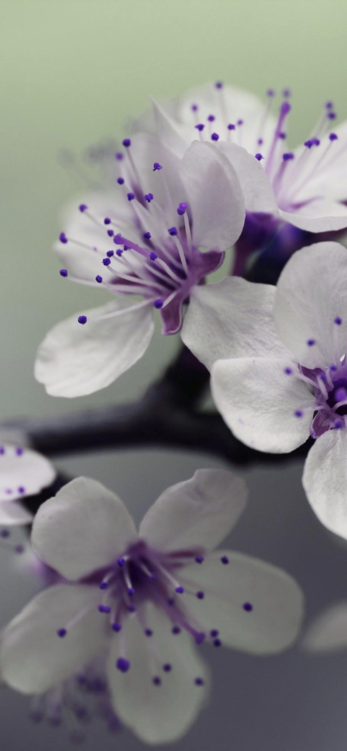 Planta Flores Purpura Blanca Wallpaper Sc Iphonexs
