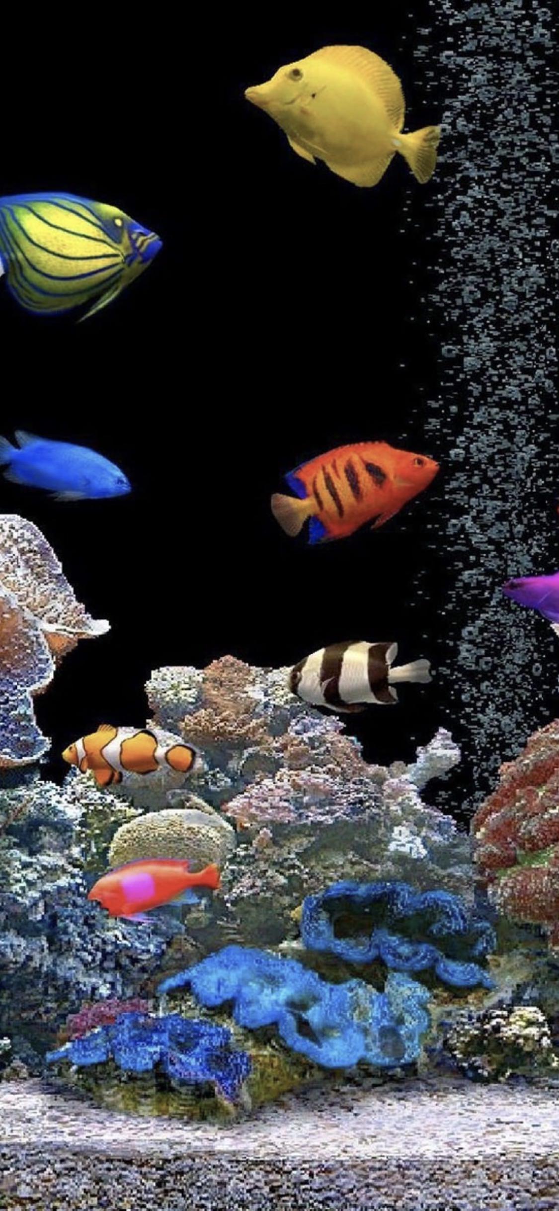 Aquarium Tank Colorful Wallpaper Sc Iphonexs