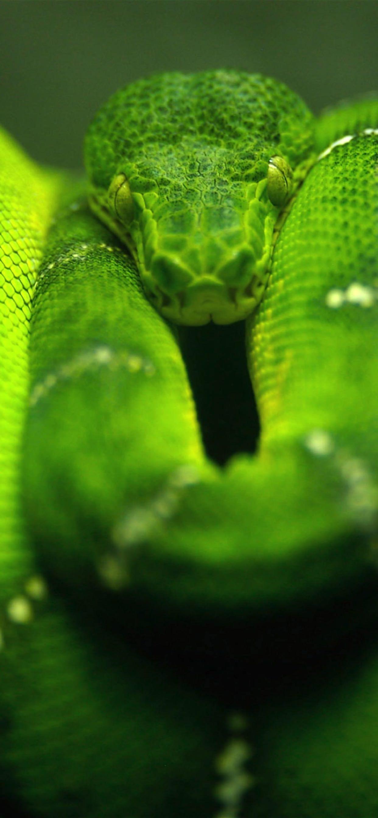 Animal Snake Green Wallpaper Sc Iphone Xs Max