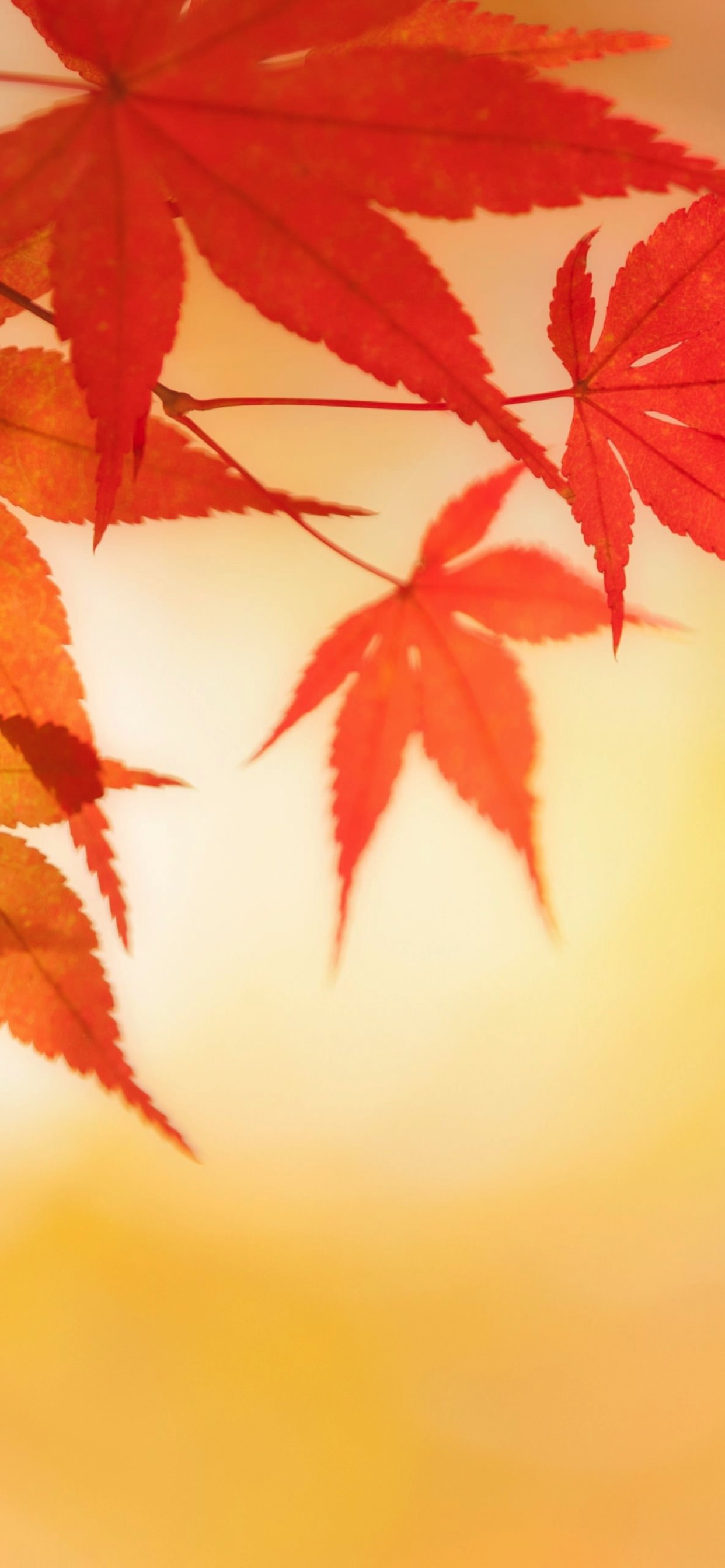 自然紅葉 Wallpaper Sc Iphone Xs Max壁紙