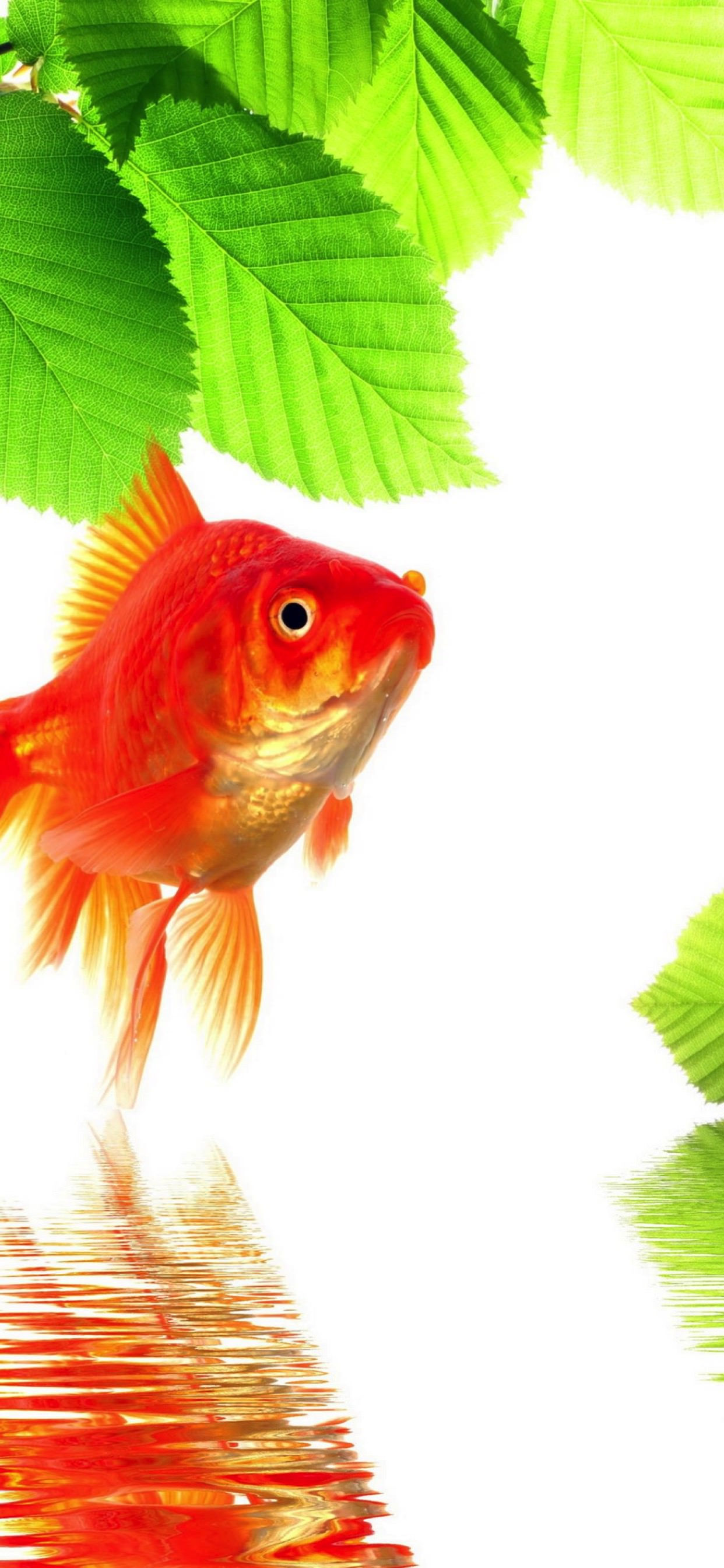 Goldfish Green Red Wallpaper Sc Iphone Xs Max