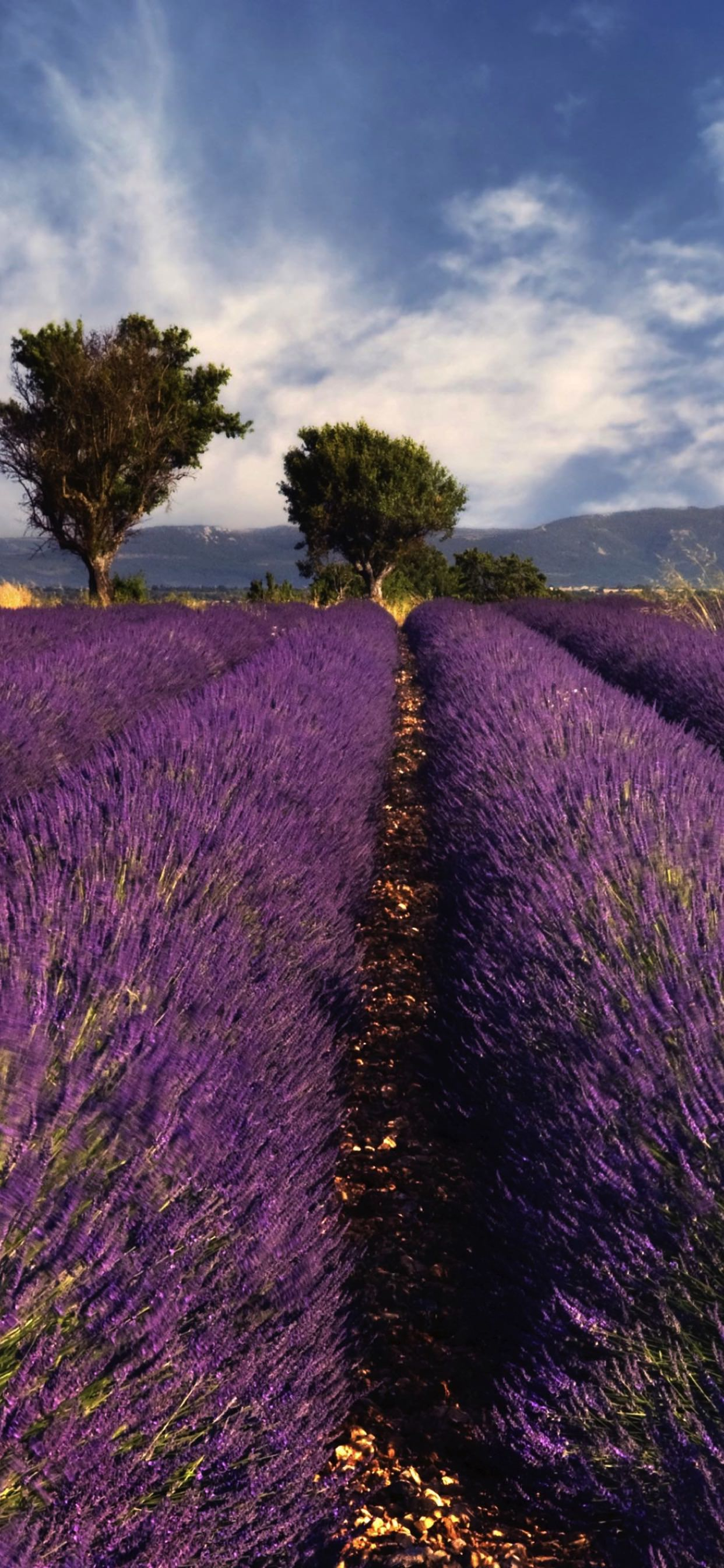 Lavender Flower Landscape Wallpaper Sc Iphone Xs Max