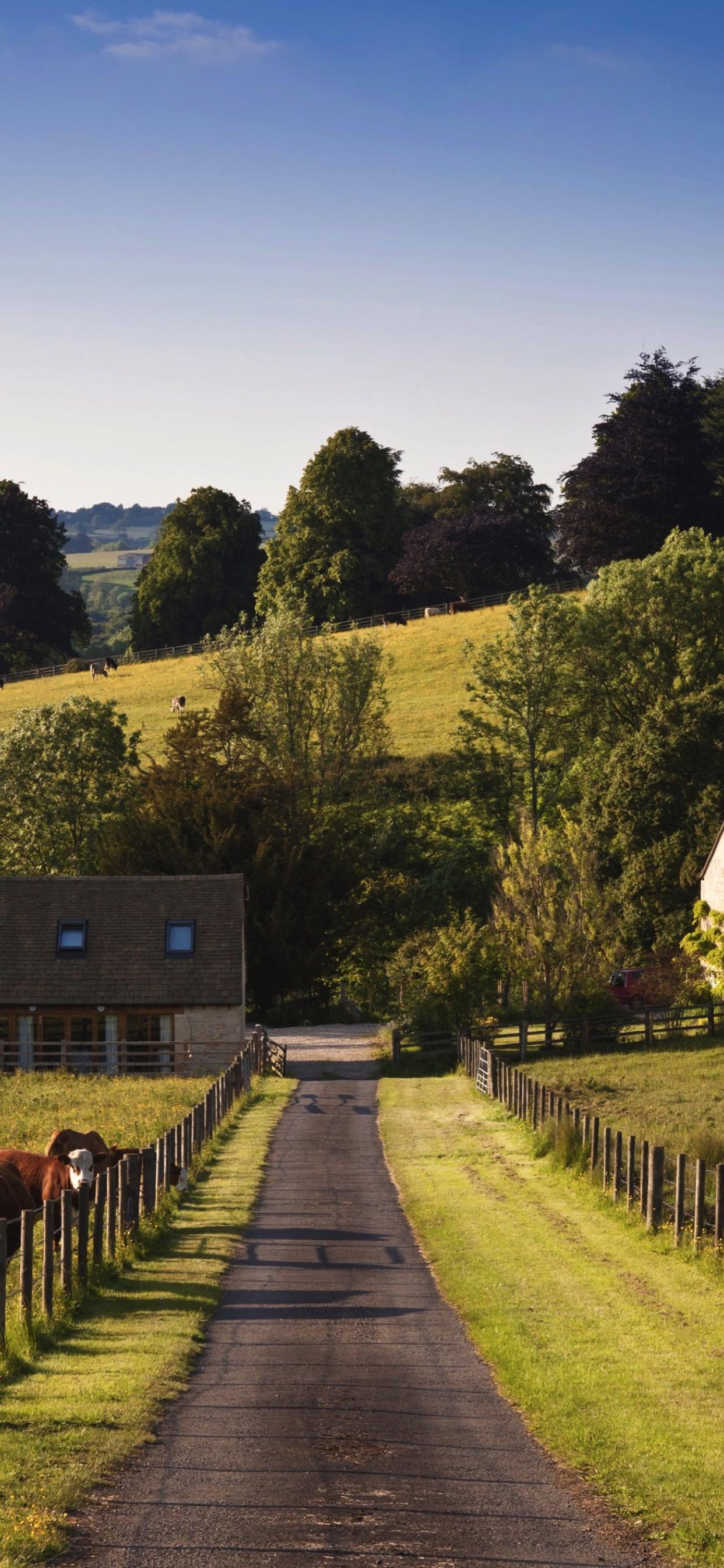 Landscape Farm Green Cow Wallpaper Sc Iphone Xs Max